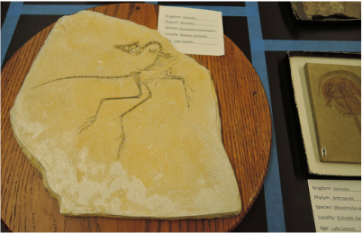 archaeopteryx lithographica at biodiversity museum day
